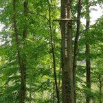 Friedleite Hundshaupten - Begräbniswald im Mai