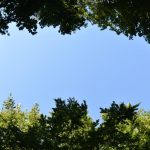 Friedleite Hundshaupten - Begräbniswald im August
