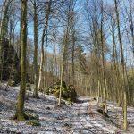Friedleite Hundshaupten - Begräbniswald im März