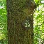 Friedleite Hundshaupten - Begräbniswald im Juli