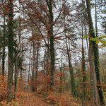 Friedleite Hundshaupten - Begräbniswald im November