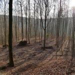 Friedleite Hundshaupten - Begräbniswald im Februar