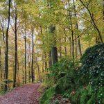 Friedleite Hundshaupten - Begräbniswald im Oktober