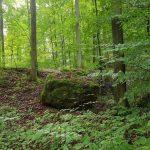 Friedleite Hundshaupten - Begräbniswald im September