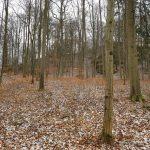 Friedleite Hundshaupten - Begräbniswald im Dezember