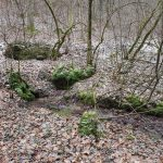 Friedleite Hundshaupten - Begräbniswald im Januar