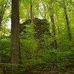 Friedleite Hundshaupten - Begräbniswald im April