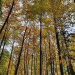 Waldfriedhof Hundshaupten - Friedleite im Herbst