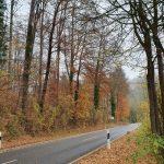 Friedleite Hundshaupten - Herbstlicher Bestattungswald
