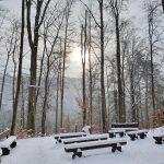 Friedleite - Begräbniswald im Januar