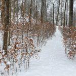 Waldfriedhof im Winter