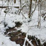 Friedleite Hundshaupten - Waldfriedhof im Schnee