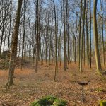 Friedleite Hundshaupten - Waldbestattung unter Bäumen