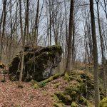 Friedleite Hundshaupten - Baumbestattung im Wald