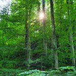 Friedleite Hundshaupten - Ruhestätte im Wald