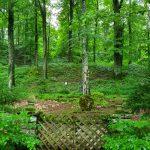 Friedleite Hundshaupten - Begräbniswald im Juni