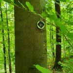 Friedleite Hundshaupten - Baumgrab im Wald